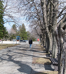Boy Walking Away Along Trees-Or Brendan Leaving