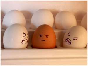 Sibling Egg Rivalry