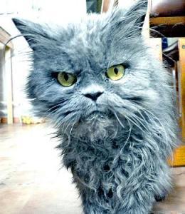 Cat B#tch Puh-leeze