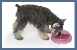 Schnauzer and Cat Food Bowl