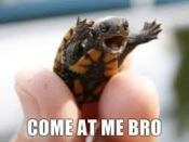 """I Dare Ya!"" Wee Turtle Is Missing!  Help Me Find Him!!"