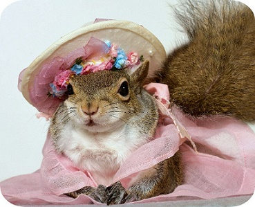 A Lovely Hat But Not Mrs Squirrel