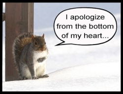 Apology Squirrel