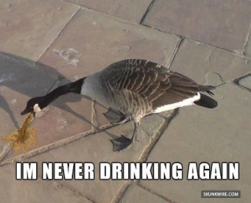 Goose Puking Im Never Drinking Again